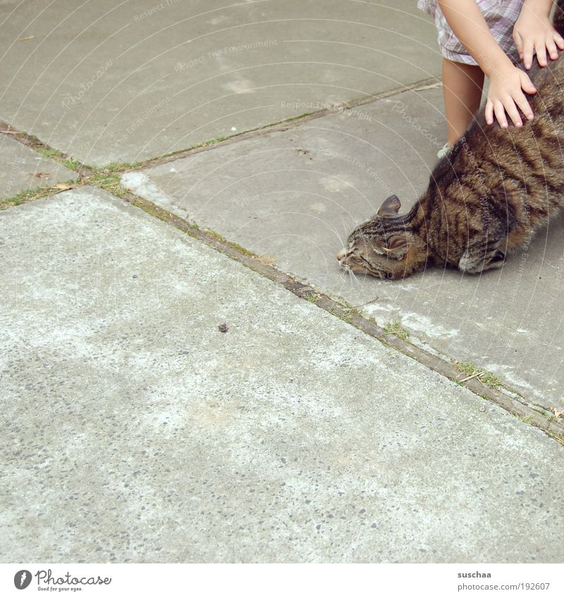 katze streicheln. und katze mag es. Kind Hand Tier Katze Zufriedenheit liegen Fell berühren genießen Zoo Haustier Mensch Textfreiraum links Streichelzoo