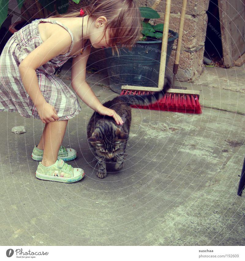 katze streicheln ... Kind Hand Mädchen Tier Katze Kindheit Kleid Idylle Fell berühren Freundlichkeit Schuhe Lebensfreude Turnschuh Haustier Geborgenheit