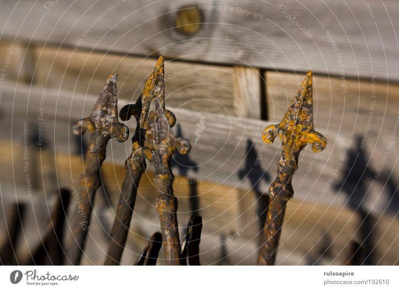 Rostzaun #2 alt gelb grau braun Metall bedrohlich Vergänglichkeit Spitze Pfeil Konzentration Vergangenheit historisch Zaun bizarr Aggression