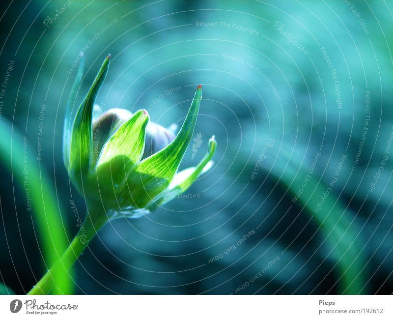 Variationen in Grün Sommer Natur Pflanze Schönes Wetter Blume Blüte Blühend Wachstum grün Vorfreude Optimismus Leben Neugier Erwartung Vergänglichkeit