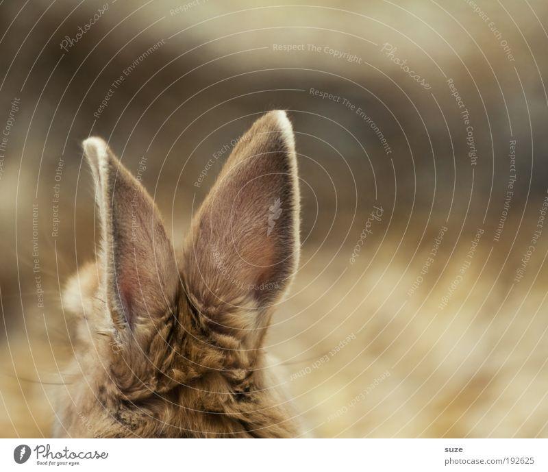 Lauschangriff Ostern Tier Haustier hören Hase & Kaninchen Ohr Stroh Stall tierisch Säugetier Osterhase Farbfoto Gedeckte Farben Innenaufnahme Menschenleer
