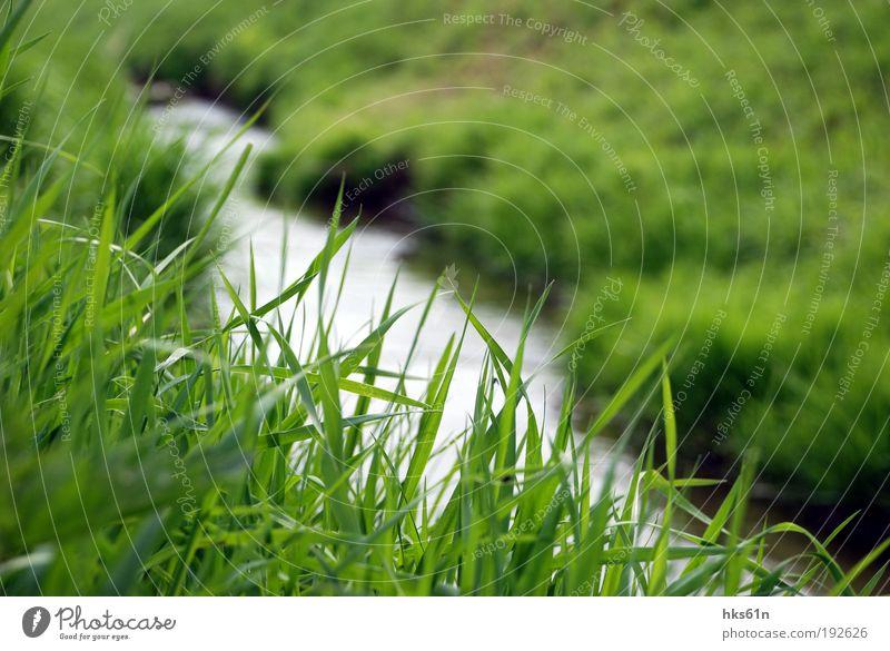 Grasgeflüster Wasser grün Pflanze Sommer ruhig Erholung Wiese Gras authentisch Fluss Halm Bach Flussufer Bachufer Grünfläche