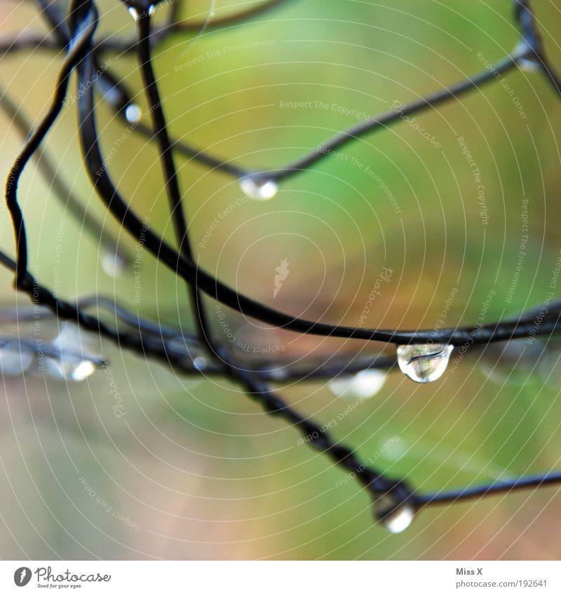 Tropfen Natur Wasser kalt Park Regen Wetter Wassertropfen nass frisch Klima Zaun Unwetter Draht Morgen schlechtes Wetter Makroaufnahme