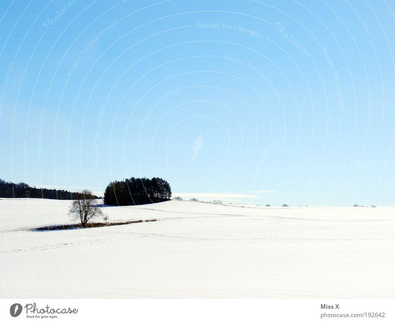 Hoffentlich das letzte Winterfoto Ferien & Urlaub & Reisen Schnee Winterurlaub Natur Landschaft Himmel Wetter Schönes Wetter Eis Frost Baum Feld Wald Hügel kalt