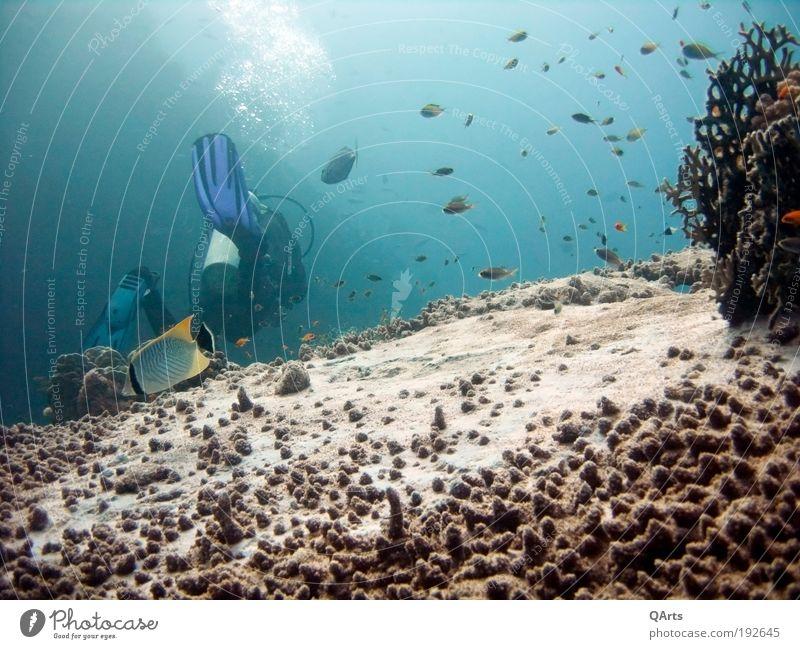 Underwater World Natur Wasser Meer Ferien & Urlaub & Reisen ruhig Erholung Freiheit Fisch Abenteuer tauchen Unterwasseraufnahme Strukturen & Formen Tier Korallenriff