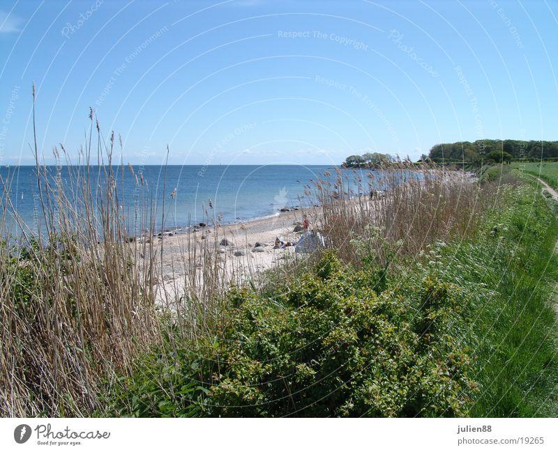 Strand von Büsum Küste Wasser Sträuche Stranddüne Himmel