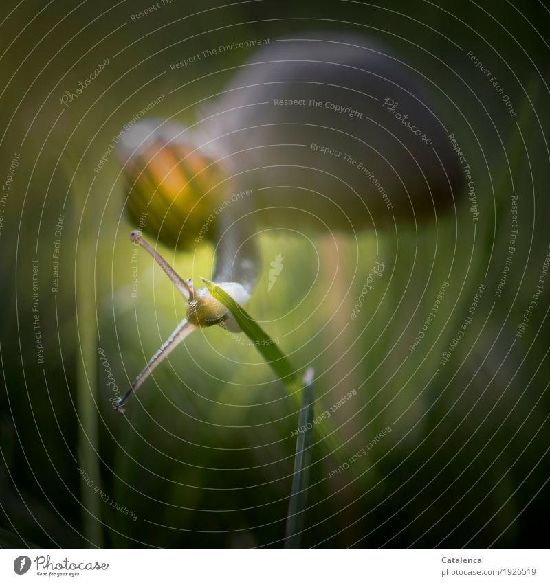 Hangelei Natur Pflanze Tier Herbst Gras Halm Pilz Garten Wiese Schnecke 1 Fressen sportlich schleimig braun gelb grün orange Willensstärke Überleben Umwelt