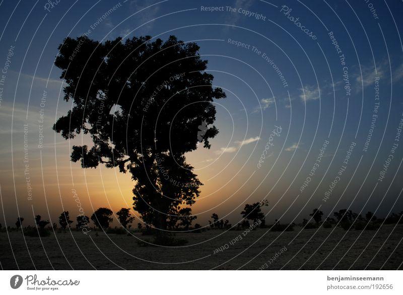 mali sunset schön Himmel Baum Sonne blau Ferien & Urlaub & Reisen schwarz Einsamkeit gelb Gefühle Wärme Landschaft Umwelt Horizont Romantik