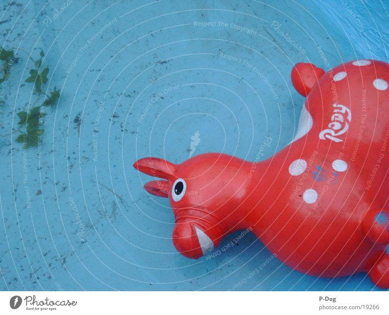 rody im pool Wasser Dinge Spielzeug Gummitier