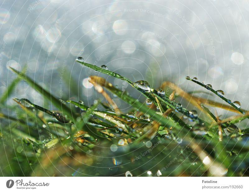 Für Sn00by - ein lieber Gruß Natur Wasser weiß grün Pflanze Winter Schnee Wiese Gras Frühling Park Landschaft Luft Eis hell glänzend