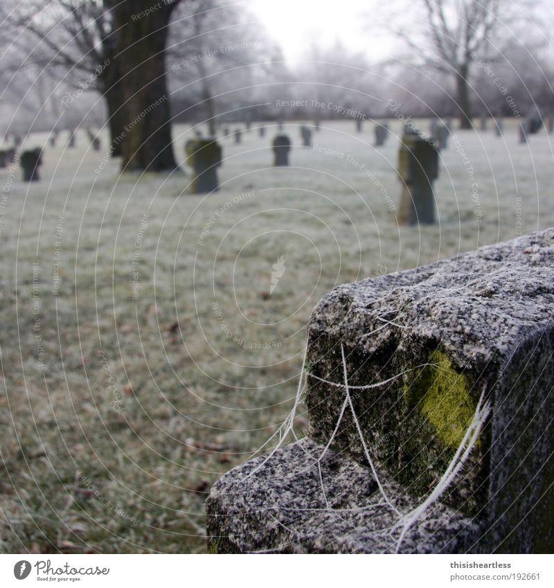 """In eises Kälte Mensch Winter Nebel Eis Frost Gras Moos Park Wiese Erfurt Deutschland Europa Hauptstadt Denkmal Spinne """"Kreuz Grabstein"""" Stein alt berühren"""