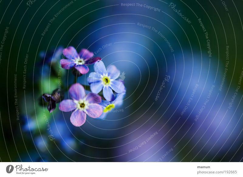 Denkzettel Natur Pflanze blau Blume Blatt Traurigkeit Blüte Frühling Glück Freundschaft Design frisch Fröhlichkeit Lebensfreude Romantik Freundlichkeit