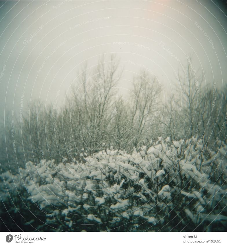 Winter ade Natur Baum Pflanze Einsamkeit Wald kalt Schnee Tod Umwelt Landschaft grau Traurigkeit Park Wetter Eis