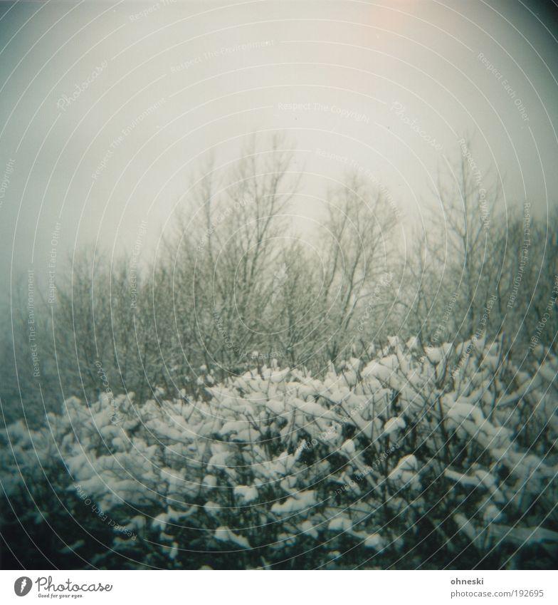 Winter ade Umwelt Natur Landschaft Pflanze Klima Wetter schlechtes Wetter Eis Frost Schnee Baum Sträucher Hecke Park Wald kalt trist grau Traurigkeit Sorge