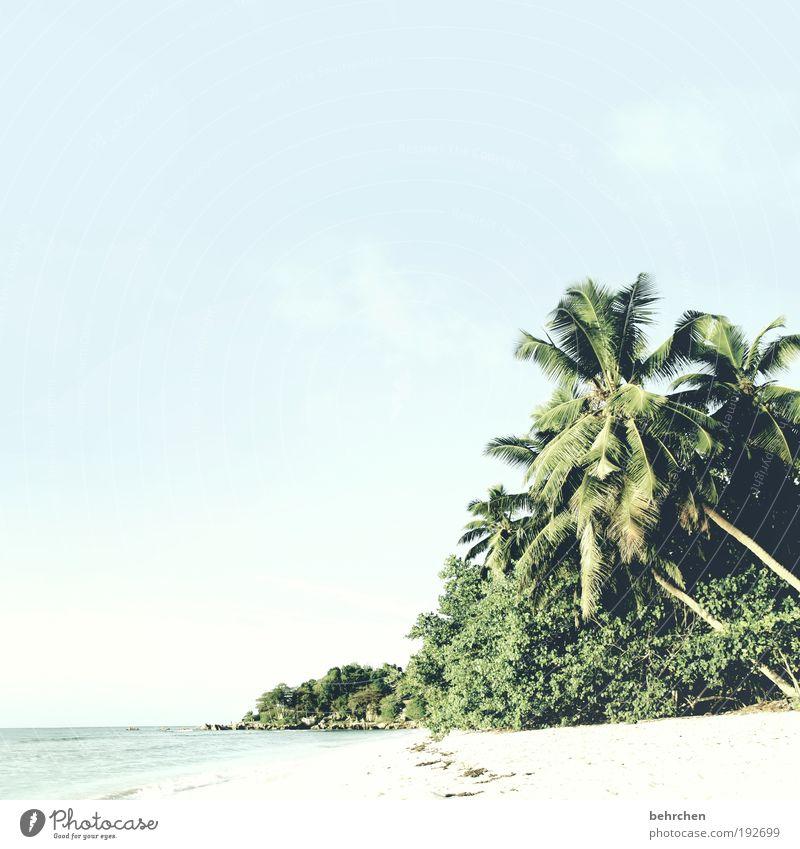 traumhaftes jala-behrchen Himmel Ferien & Urlaub & Reisen Sommer Baum Meer Ferne Strand Glück Freiheit Zufriedenheit Tourismus Sträucher Insel fantastisch