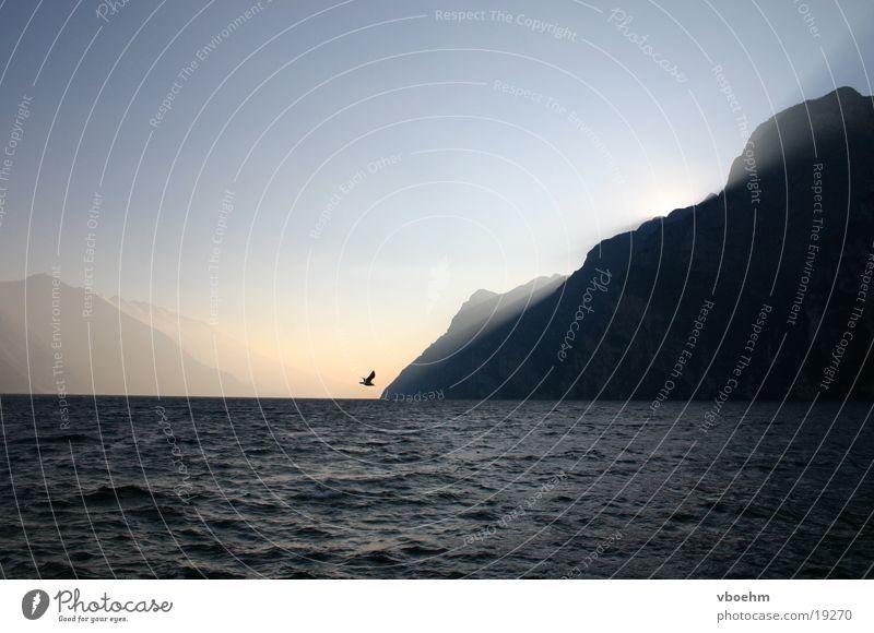 Dämmerung #2 Vogel Italien Gardasee Stimmung Licht Sonnenuntergang Berge u. Gebirge Himmel Abend Wasser