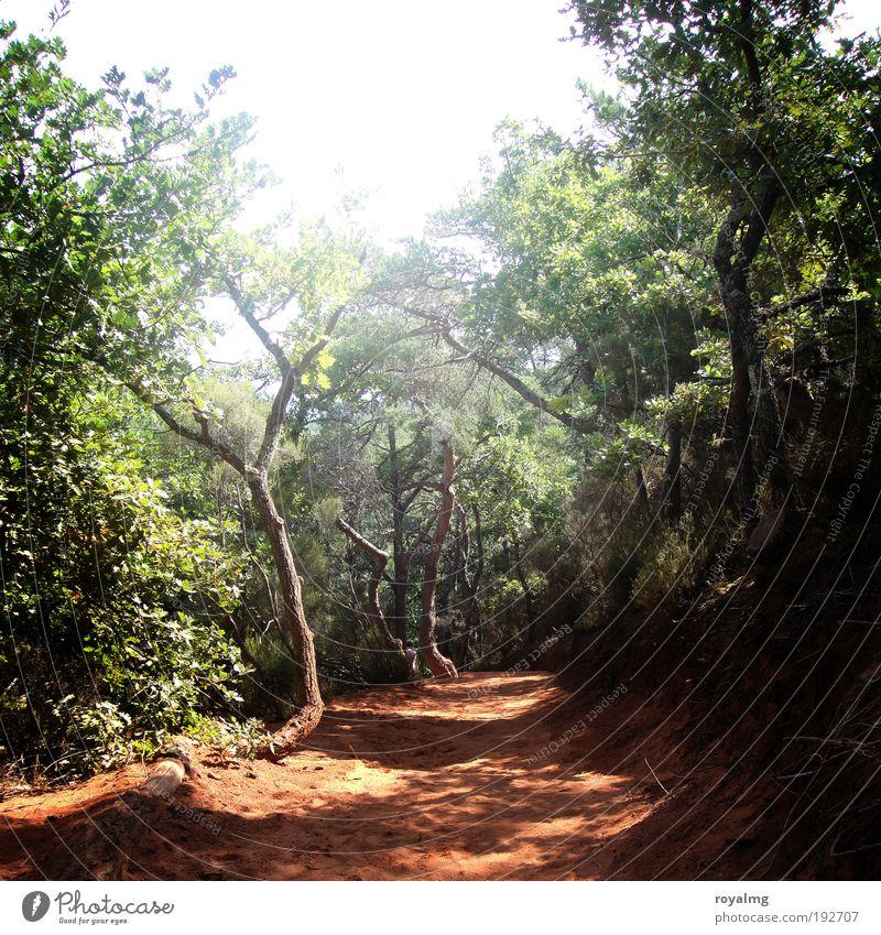 Ocker von Roussillon schön Sonne Sommer ruhig Ferne Wald Freiheit Ausflug Tourismus Ziel Südfrankreich Frankreich Schönes Wetter Sommerurlaub Safari Expedition