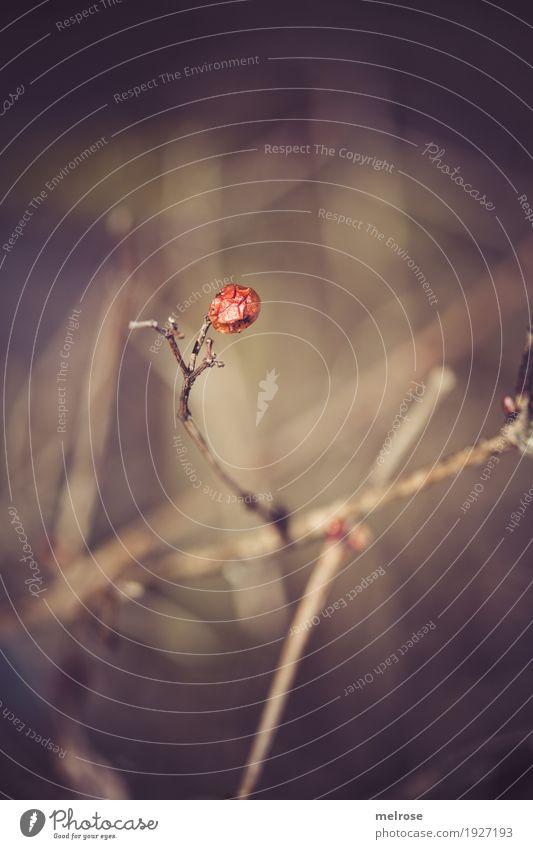 Überlebender Natur Pflanze Farbe grün rot dunkel Wald Umwelt Blüte Herbst braun Freizeit & Hobby leuchten Feld Sträucher Blühend