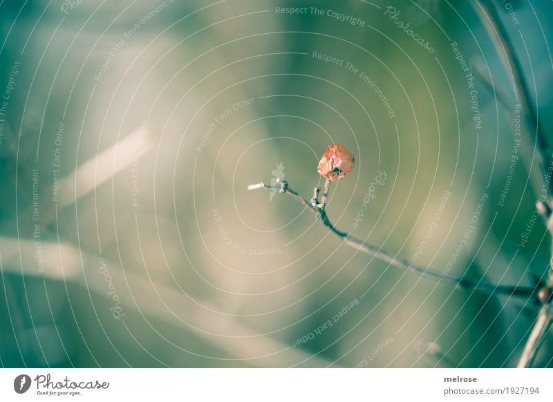 im Grünen ... Umwelt Natur Frühling Schönes Wetter Pflanze Sträucher Blüte Wildpflanze Beerensträucher Beerenfruchtstand Zweige u. Äste Feld Wald Farbe
