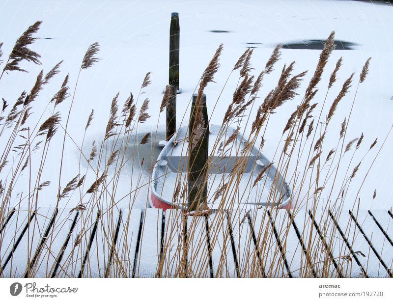 Eingefroren Ferien & Urlaub & Reisen Winter Winterurlaub Natur Landschaft Wasser Eis Frost Schnee Pflanze Gras Fluss Ruderboot Hafen Stimmung ruhig Anlegestelle