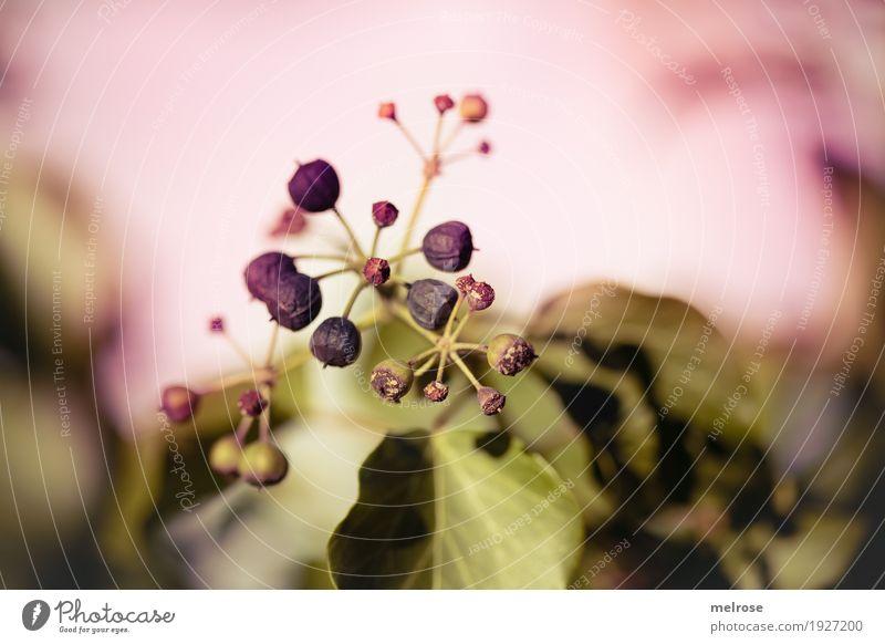 Beeren-Vintage Natur Pflanze grün schön weiß Blatt Winter kalt Stimmung rosa Feld Wachstum Sträucher Fröhlichkeit Perspektive Blühend