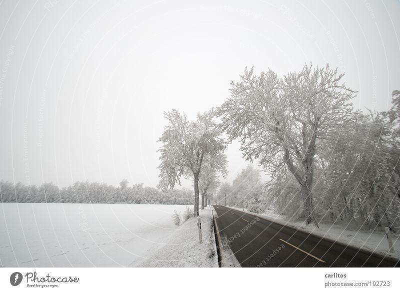 Niedersächsisch Sibirien II Natur weiß Baum Winter Einsamkeit schwarz Straße kalt Landschaft Bewegung Eis Ordnung ästhetisch Frost Idylle frieren