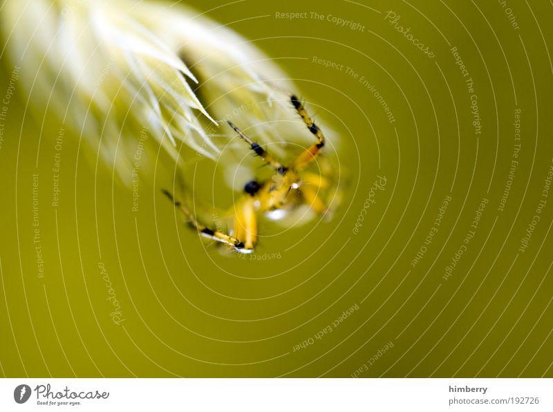 web content management Medienbranche Umwelt Natur Pflanze Tier Frühling Sommer Gras Sträucher Wiese Feld Wildtier Spinne Arbeit & Erwerbstätigkeit bauen