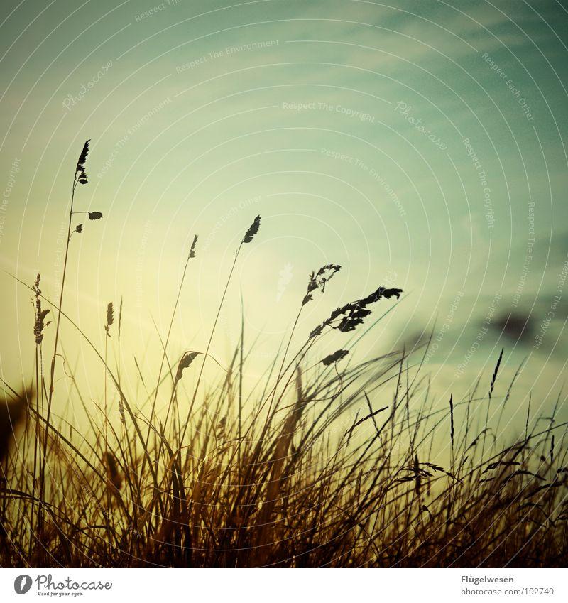 Der Traum vom Sommer Himmel Ferien & Urlaub & Reisen Pflanze schön Sonne Meer Ferne Umwelt Gras Küste Lifestyle Freiheit Zufriedenheit Freizeit & Hobby