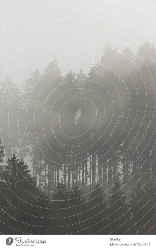 Morgennebel Natur Baum Landschaft ruhig dunkel Wald grau Stimmung Wetter Nebel trist geheimnisvoll mystisch Verhext faszinierend Waldrand