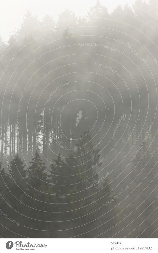 wen der Nebel ruft Natur Pflanze Baum Landschaft ruhig dunkel Wald Umwelt grau Stimmung Wetter geheimnisvoll mystisch Waldrand Nebelschleier