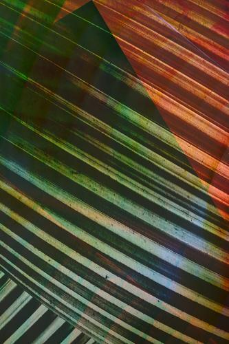 Texturen von tropischen Pflanzen grün Blatt dunkel Lifestyle Stil Kunst orange Design Linie Zufriedenheit modern elegant ästhetisch graphisch Gemälde exotisch