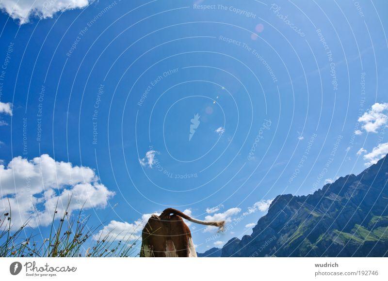 Du kannst mich mal... Natur Himmel blau Sommer Wolken Tier Gras Berge u. Gebirge Freiheit Landschaft laufen Coolness Alpen Kuh Langeweile Schönes Wetter