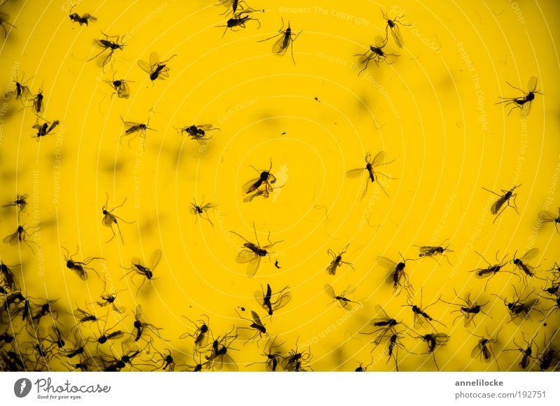 Das tapfere Schneiderlein Natur Tier Haus gelb Umwelt fliegen Wildtier Klima Fliege Häusliches Leben Insekt fangen bizarr Ekel krabbeln Blumentopf