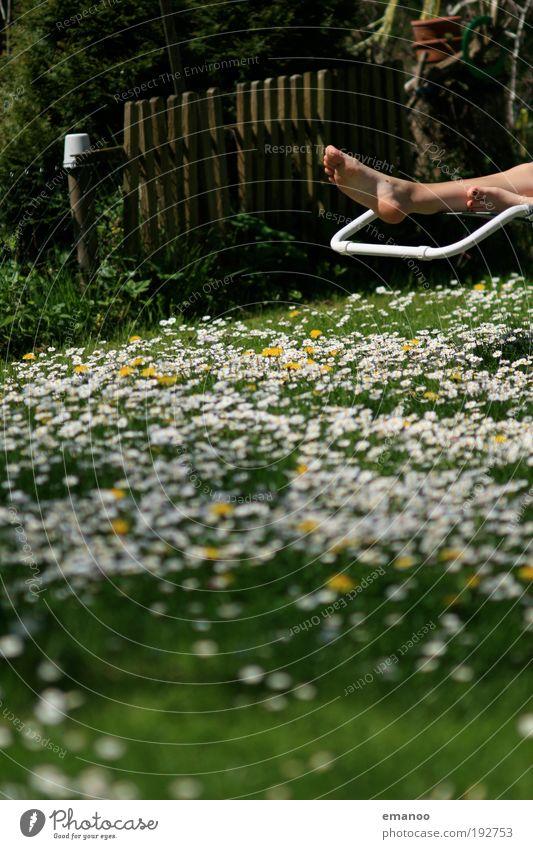 summer's coming Mensch Natur schön Pflanze Sonne Sommer Blume Freude ruhig Erholung Wiese Landschaft Freiheit Gras Garten Frühling