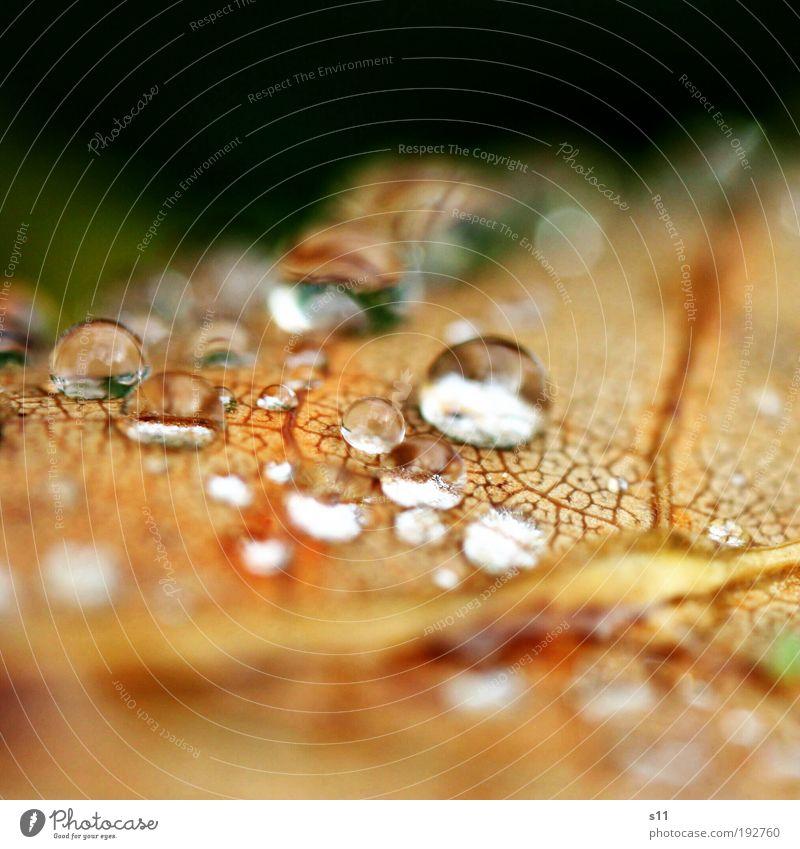 silver drops Natur Pflanze schön weiß Blatt kalt Umwelt Herbst klein braun Park glänzend frisch elegant authentisch ästhetisch