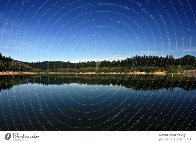 Morgens am See Himmel Natur blau Wasser Ferien & Urlaub & Reisen grün Sommer Pflanze ruhig Erholung Wald Landschaft Freiheit Schönes Wetter Idylle Seeufer