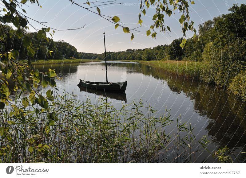 Sommersee am Abend ruhig Ferien & Urlaub & Reisen Segeln Umwelt Natur Landschaft Wasser Wolkenloser Himmel Schönes Wetter Gras Seeufer Wasserfahrzeug grün