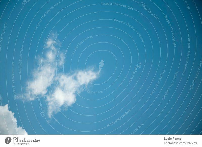 A Butterfly Fluttered By Natur Himmel weiß blau Ferien & Urlaub & Reisen Wolken Erholung Glück träumen Luft Wetter fliegen Lebensfreude Schmetterling leicht atmen
