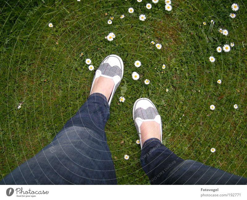 Gänsemarsch Natur weiß Blume grün Pflanze Sommer Ferien & Urlaub & Reisen Farbe Wiese feminin Fuß Beine Zufriedenheit laufen frisch Fröhlichkeit