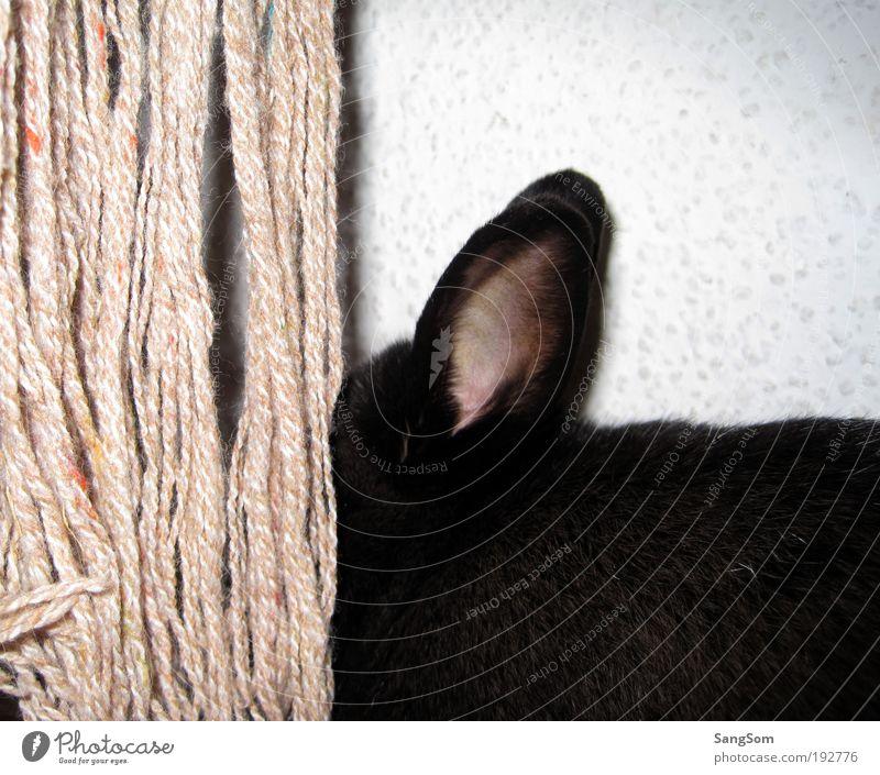 Versteckt Freude schwarz Tier Ohr Fell Neugier verstecken Hase & Kaninchen Haustier Schal Wolle Gefühle