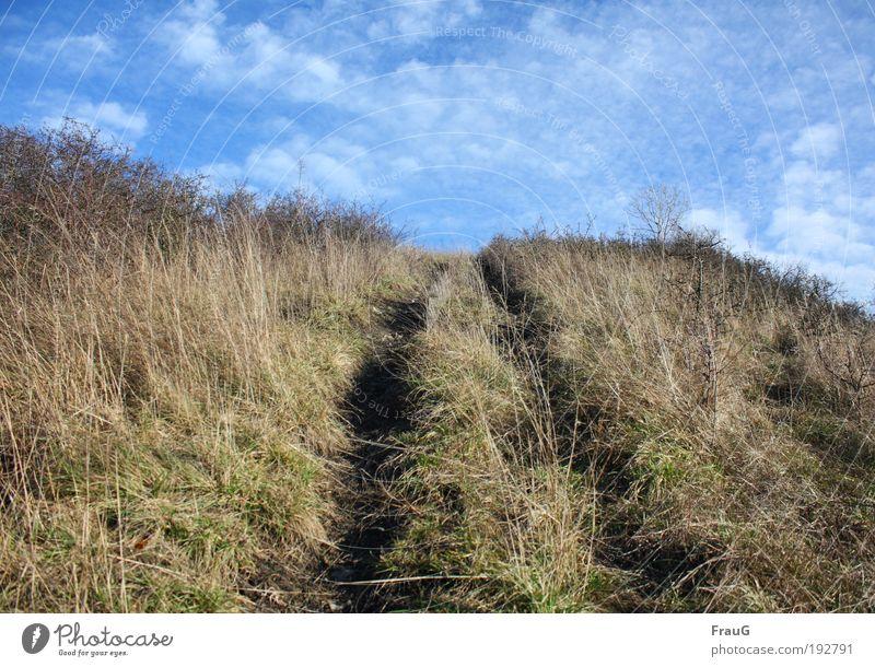 Wohin gehts? Natur Himmel grün blau Wolken Gras Freiheit Landschaft braun gehen Ausflug natürlich Hügel Neugier Schönes Wetter Erwartung