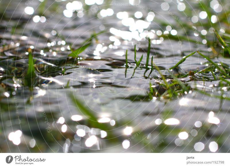 Feuchtgebiet Natur Wasser Sommer Herbst Wiese Gras Frühling Park Landschaft Zufriedenheit glänzend Umwelt nass frisch Klima natürlich