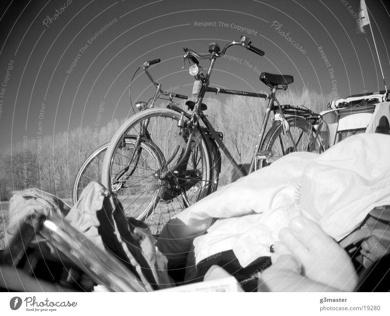 Gazellen im Park Pappeln Infrarotaufnahme Zehen Freizeit & Hobby Hollandräder Schwarzweißfoto Fahrradanhänger