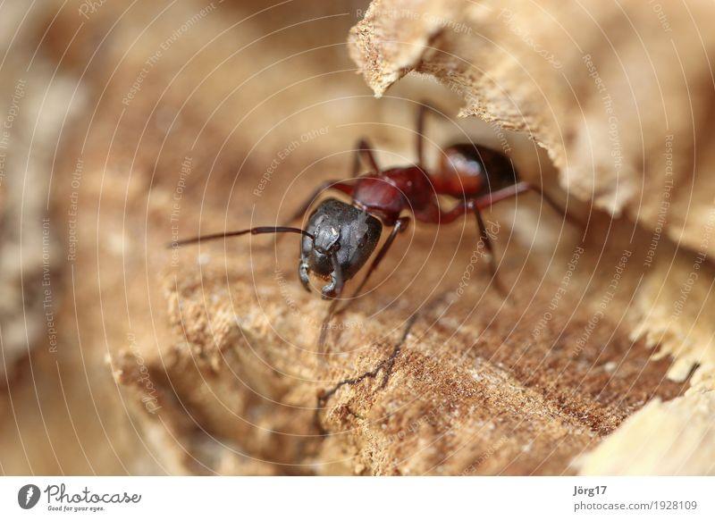 Ameise Natur Tier Leben Wildtier Ameise