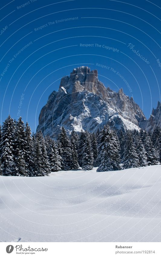 Dolomites & Mountains Umwelt Natur Landschaft Wasser Sonne Sonnenlicht Winter Wetter Schönes Wetter Eis Frost Schnee alt weiß Wolkenstin Dolomiten Baum