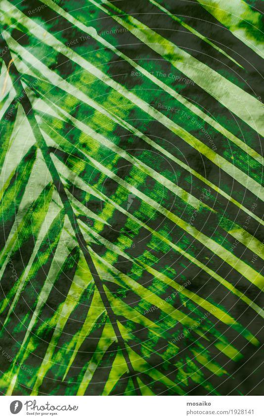 Texturen von tropischen Pflanzen Leben Wohlgefühl Sinnesorgane Meditation Spa Kunst Kunstwerk Gemälde Natur Farn Grünpflanze exotisch Wald ästhetisch