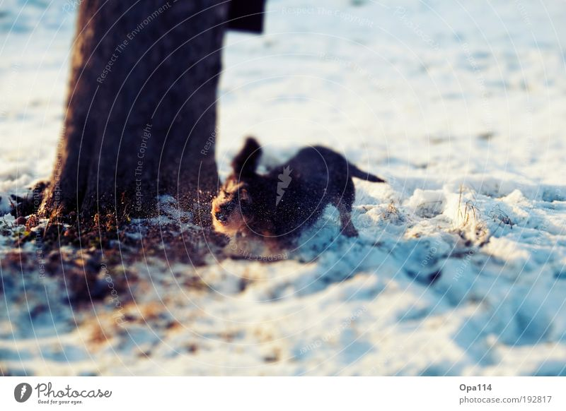 Wohlfühlen Natur weiß Baum blau Pflanze Freude Winter schwarz Tier Schnee Wiese Glück Hund braun Feld rosa