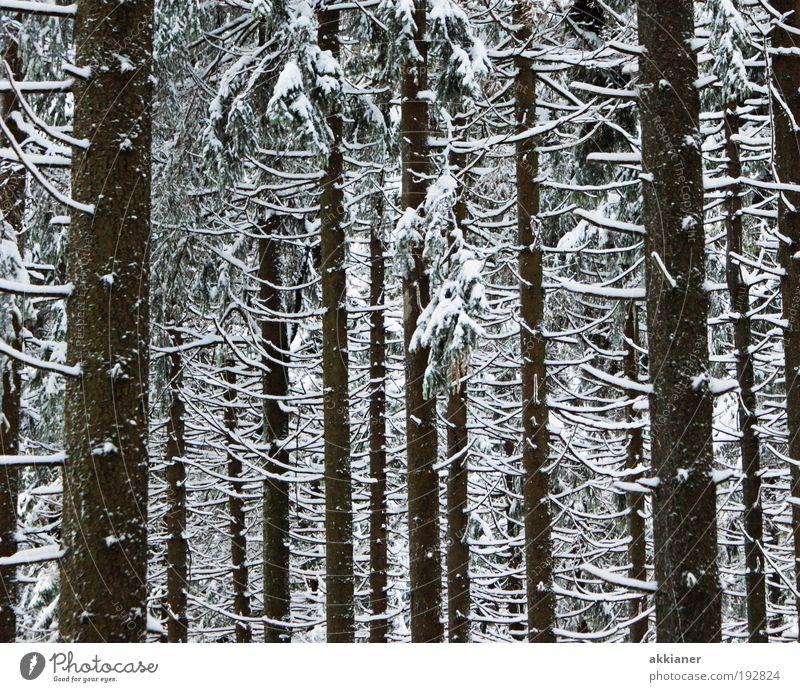 Winterwald Umwelt Natur Landschaft Pflanze Klima Wetter schlechtes Wetter Eis Frost Schnee Baum Wald Berge u. Gebirge Coolness dunkel hoch kalt schwarz weiß