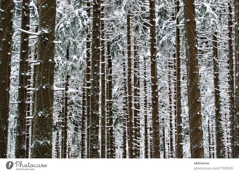 Ein Baum mehr! ;-) Natur weiß Pflanze Winter schwarz Wald dunkel kalt Schnee Landschaft Eis Wetter Umwelt Coolness Frost