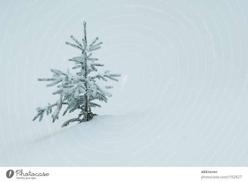 Verschneit Natur weiß Baum Pflanze Winter Umwelt Landschaft kalt Schnee klein Park Eis Wetter Klima Frost Coolness